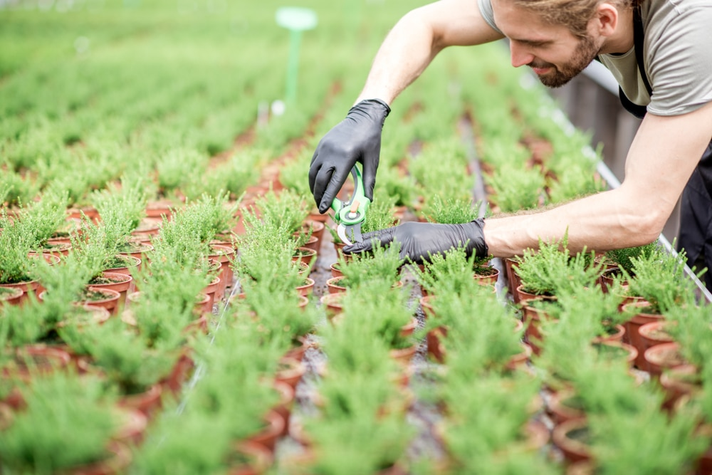Plant growing firms at risk of going insolvent on a massive scale